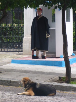 Presidential guard and Lucy the official presidential street dog